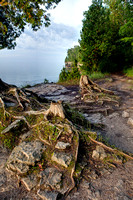 Cedar Stumps at Cave Point